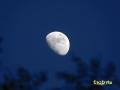 Luna_-_Zoom_1.jpg